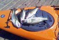 Kayak Bass Fishing Norfork Lake Missouri
