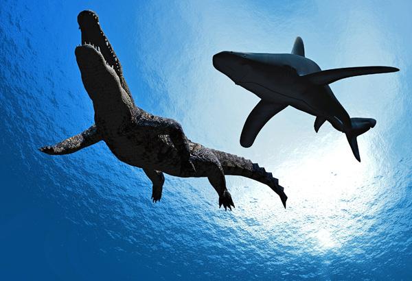 Alligators vs Sharks